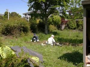 苗圃の苗を掘り起こしてポットへ移植