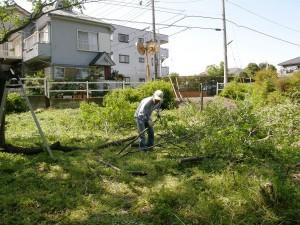 枝葉が伸びたけやきを剪定