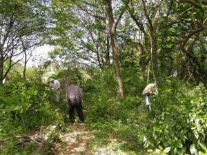 緑地内の枯損木などを整理中