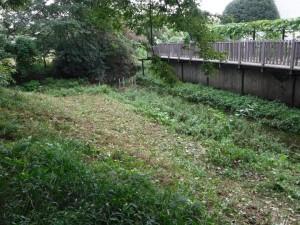 川際の草刈り終了