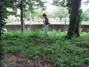 刈払機による草刈り