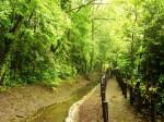 緑地保全林16844
