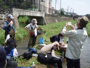 20140728-魚類調査2