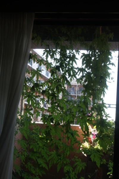 ①ゴ-ヤの夏-1