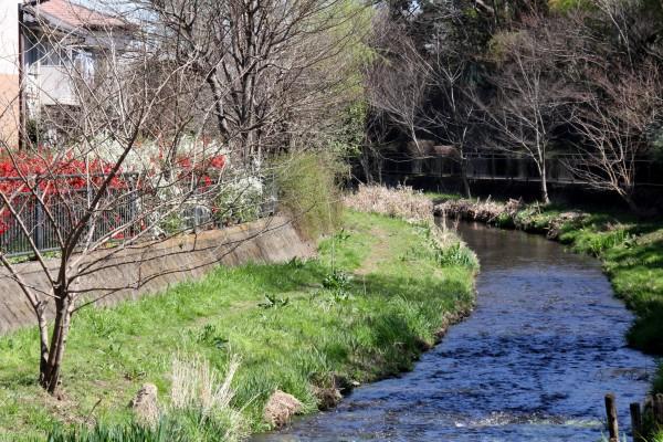 ①落合川の春