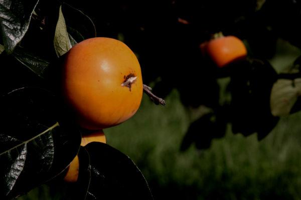 ①実りの秋