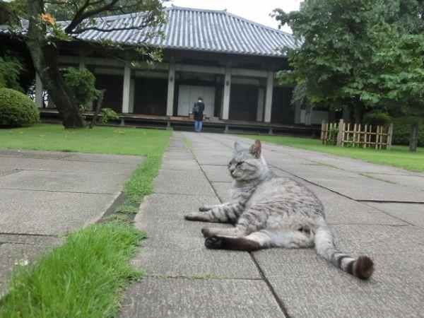 ①谷中の猫