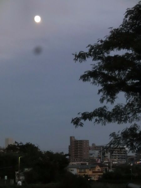 ①黒目川-13夜
