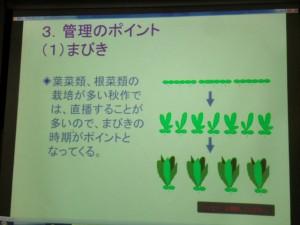家庭菜園セミナー「秋作のポイント」 (11)