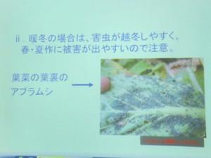 家庭菜園セミナー「秋作のポイント」 (12a)