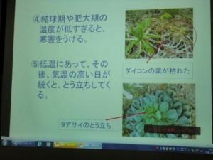 家庭菜園セミナー「秋作のポイント」 (6)