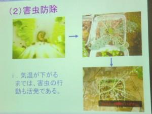 家庭菜園セミナー「秋作のポイント」 (12)