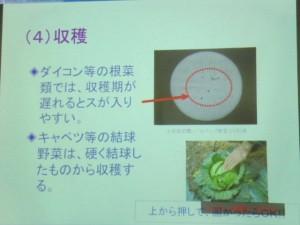 家庭菜園セミナー「秋作のポイント」 (15)