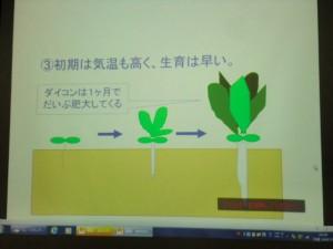家庭菜園セミナー「秋作のポイント」 (5)