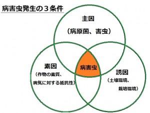 病害虫発生の3条件