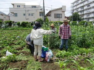 農園共用部除草 (12)