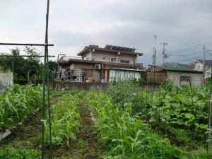 農園共用部除草 (24)