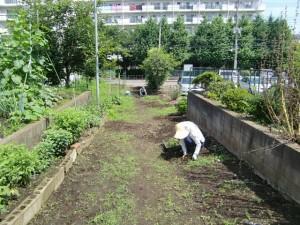 農園共用部除草 (3)