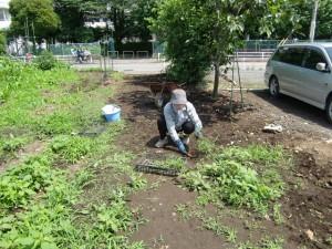 農園共用部除草 (4)