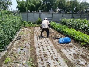 農園共用部除草 (6)