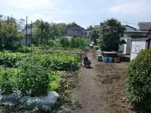農園共用部除草 (1)