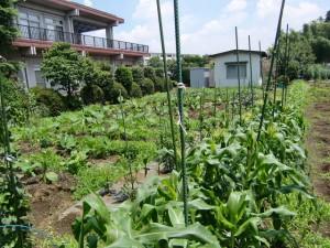 農園共用部除草 (10)