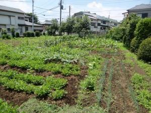農園共用部除草 (11)