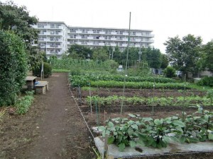 農園共用部除草 (20)