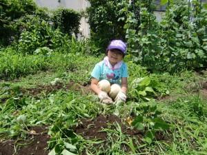 H25.6_サツマイモ畑の草取り  (7)