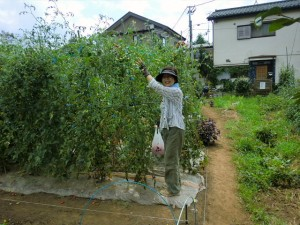 H250808_収穫 (4)