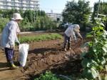 H25秋野菜d (3)