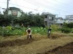 H25秋野菜a (5)
