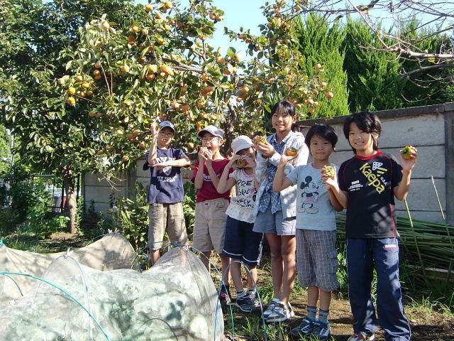 H25秋野菜報告 (1)