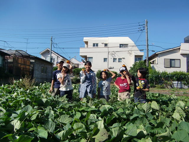 H25秋野菜報告 (2)