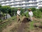 H25秋野菜報告 (6)