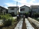 H25秋野菜報告 (13)