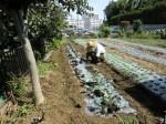 H25秋野菜報告 (14)