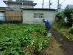 H25秋野菜報告 (18)