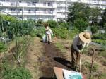 H25秋野菜報告 (4)