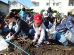 H251027サツマイモ掘り (15)