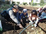 H251027サツマイモ掘り (31)