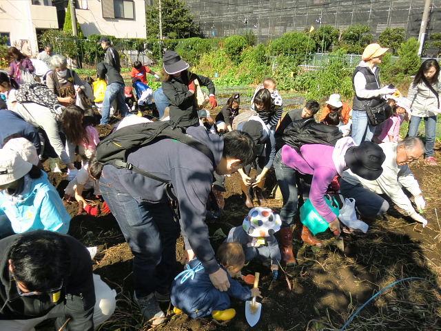 H251027サツマイモ掘り2 (23)