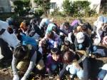 H251027サツマイモ掘り (13)