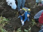 H251027サツマイモ掘り2 (22)