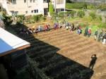 H251027サツマイモ掘り2 (6)