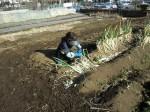 野島農園1月活動報告 (30)