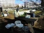 野島農園1月活動報告 (31)