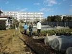 野島農園1月活動報告 (32)