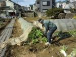 野島農園1月活動報告 (38)