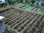 251100野島農園11月様子 (13)